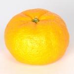 柚子の写真